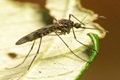 Mosquito activity is still at its peak during early fall but taking steps to prevent mosquito bites can reduce risk of West Nile Virus. (U.S. Army photo)